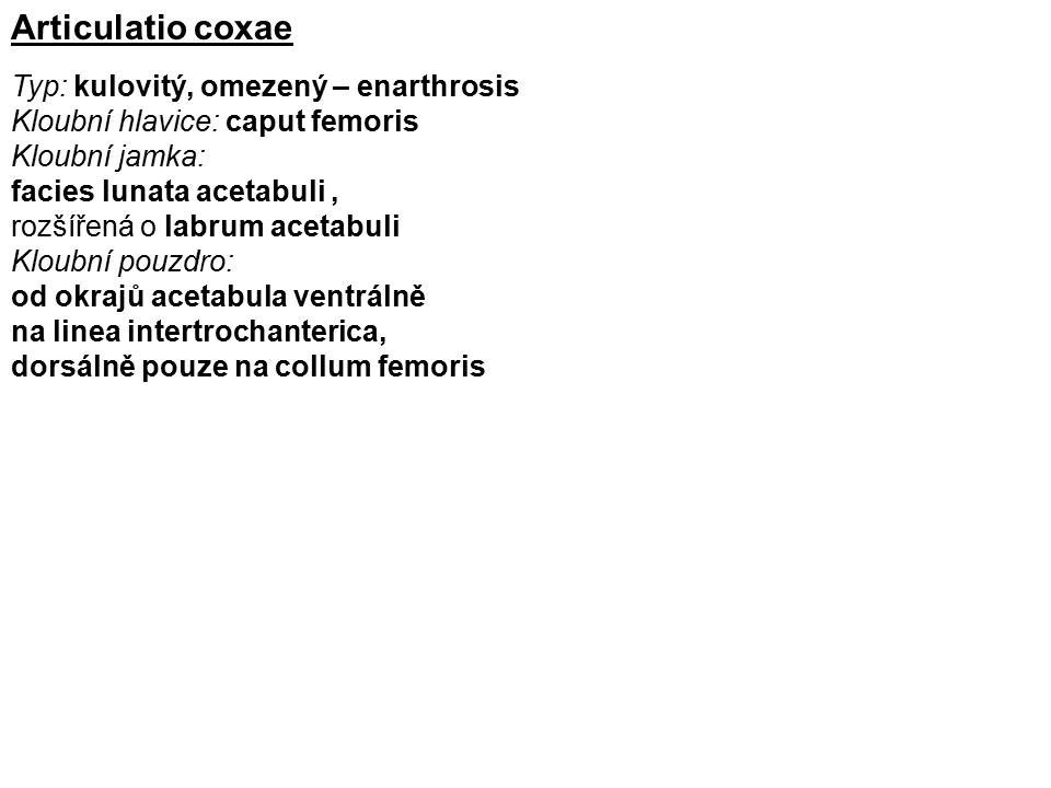 Articulatio coxae Typ: kulovitý, omezený – enarthrosis