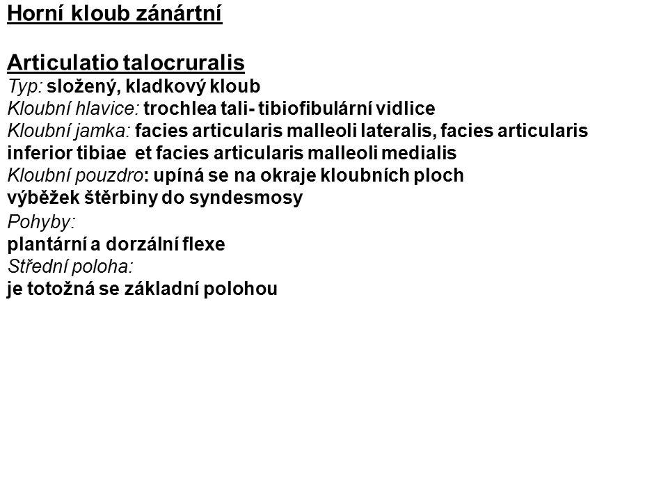Articulatio talocruralis