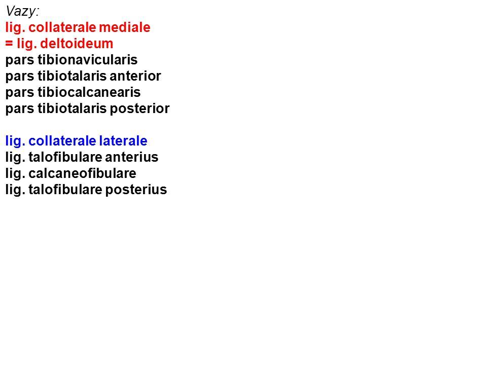 Vazy: lig. collaterale mediale. = lig. deltoideum. pars tibionavicularis. pars tibiotalaris anterior.