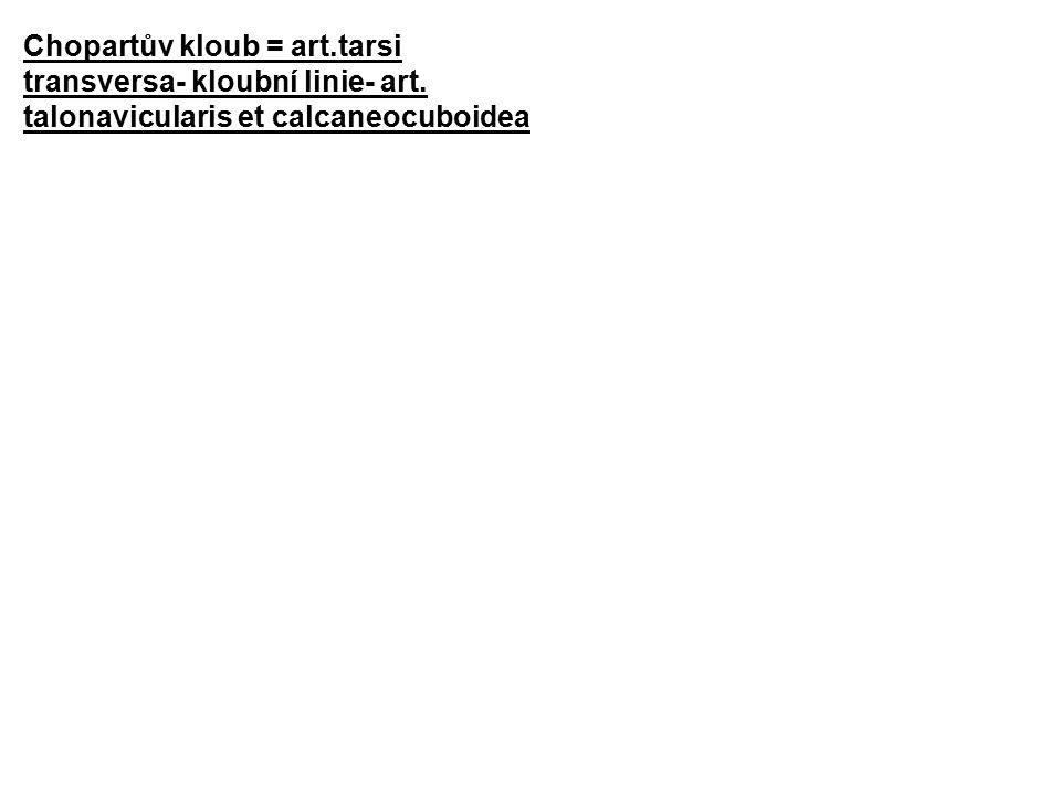 Chopartův kloub = art. tarsi transversa- kloubní linie- art