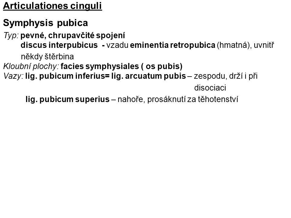 Articulationes cinguli Symphysis pubica