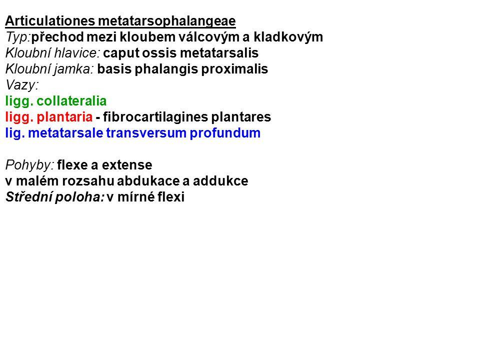 Articulationes metatarsophalangeae