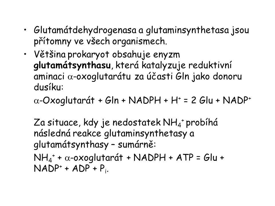 Glutamátdehydrogenasa a glutaminsynthetasa jsou přítomny ve všech organismech.
