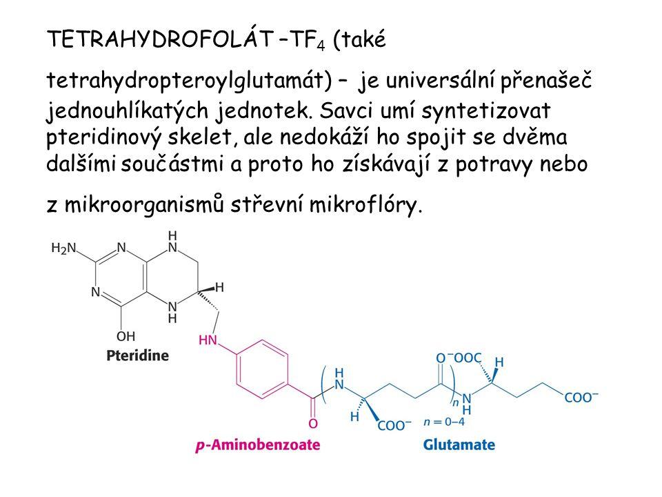 TETRAHYDROFOLÁT –TF4 (také tetrahydropteroylglutamát) – je universální přenašeč jednouhlíkatých jednotek.
