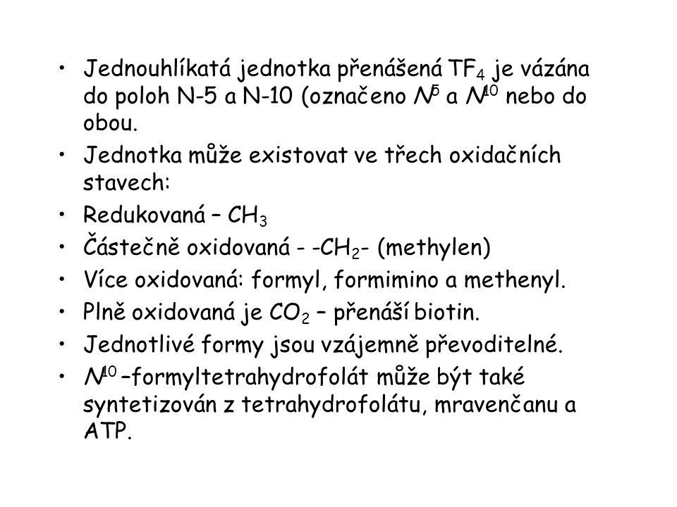 Jednouhlíkatá jednotka přenášená TF4 je vázána do poloh N-5 a N-10 (označeno N5 a N10 nebo do obou.