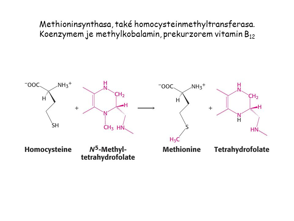 Methioninsynthasa, také homocysteinmethyltransferasa
