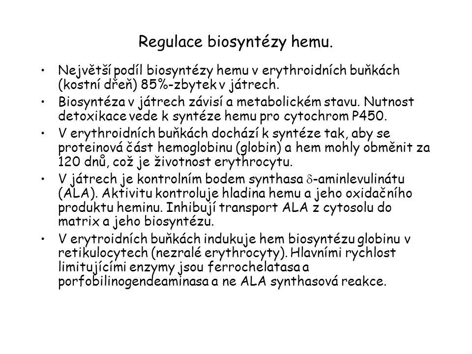 Regulace biosyntézy hemu.
