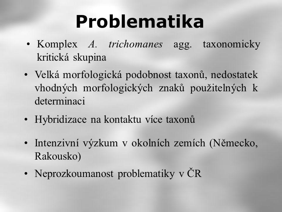 Problematika Komplex A. trichomanes agg. taxonomicky kritická skupina
