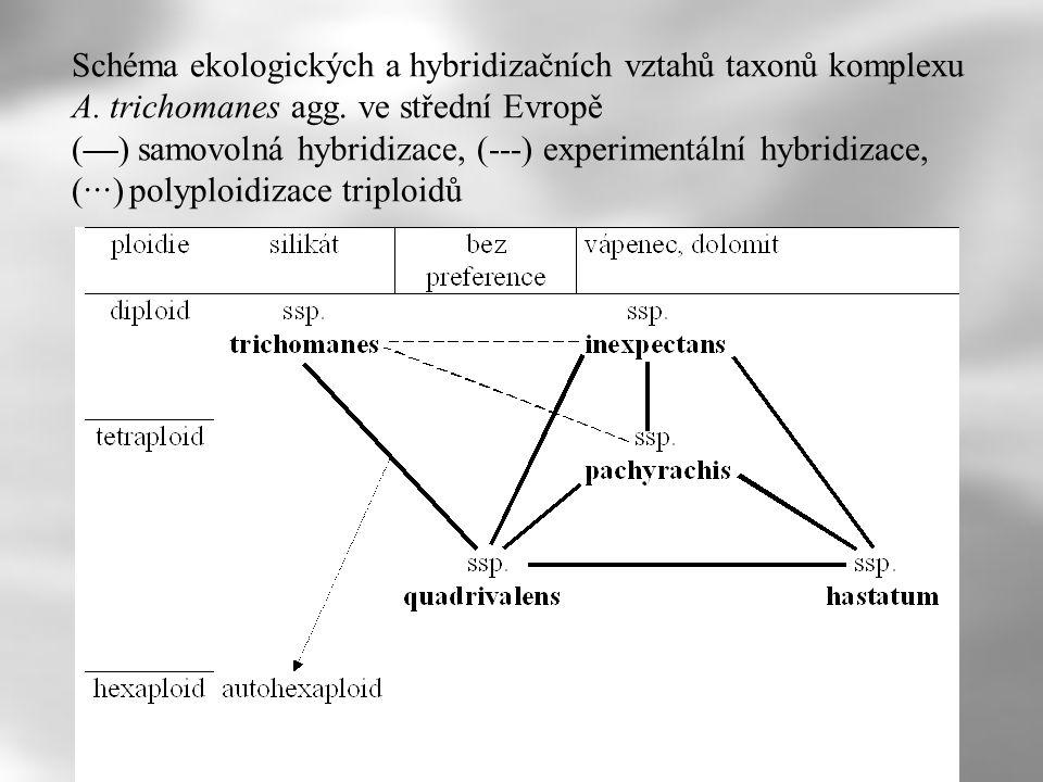 Schéma ekologických a hybridizačních vztahů taxonů komplexu A