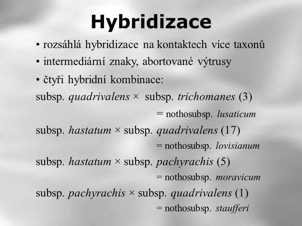 Hybridizace rozsáhlá hybridizace na kontaktech více taxonů