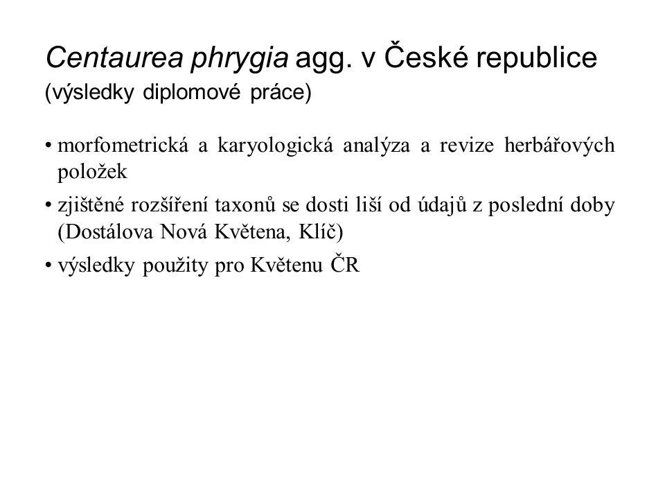Centaurea phrygia agg. v České republice