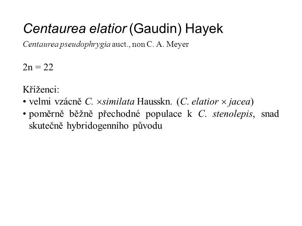 Centaurea elatior (Gaudin) Hayek