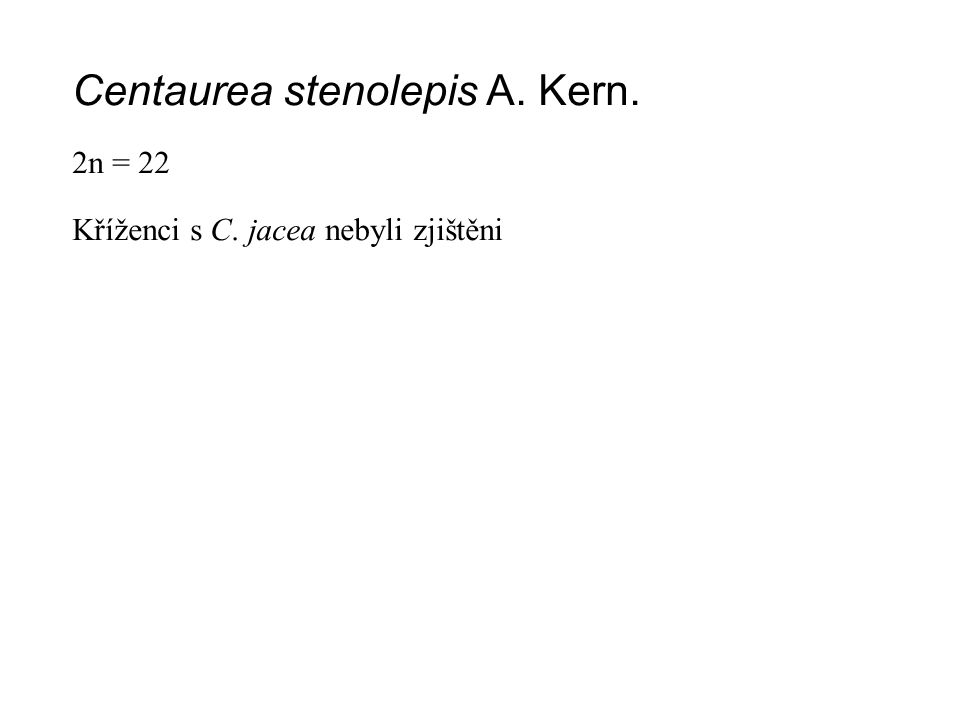 Centaurea stenolepis A. Kern.