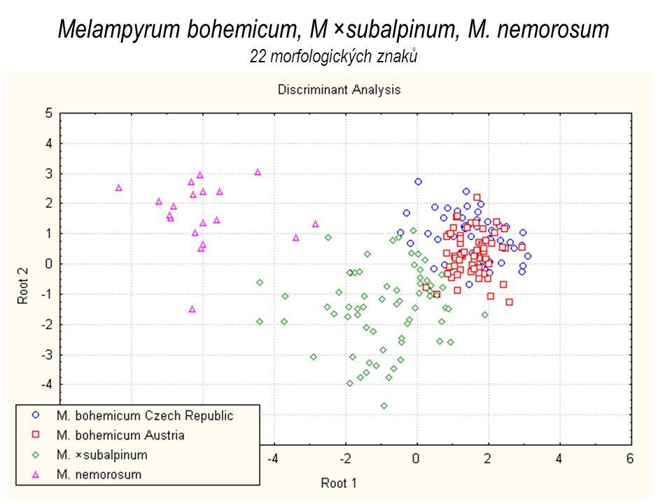 Melampyrum bohemicum, M ×subalpinum, M