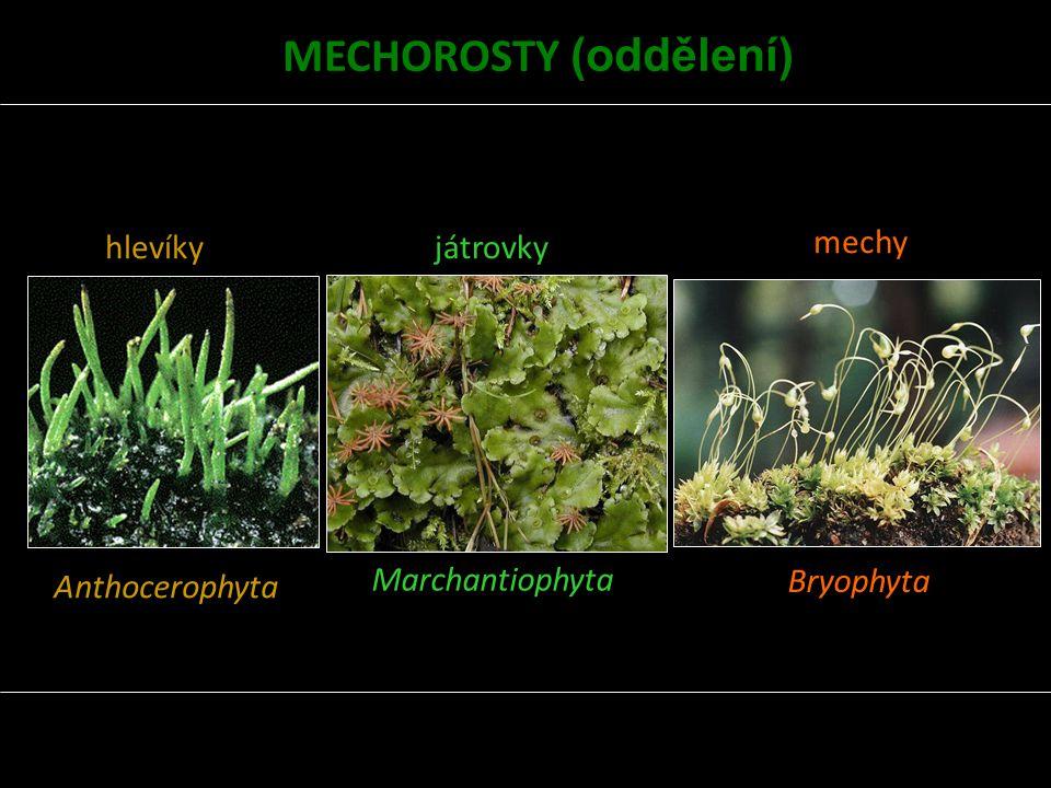 MECHOROSTY (oddělení)