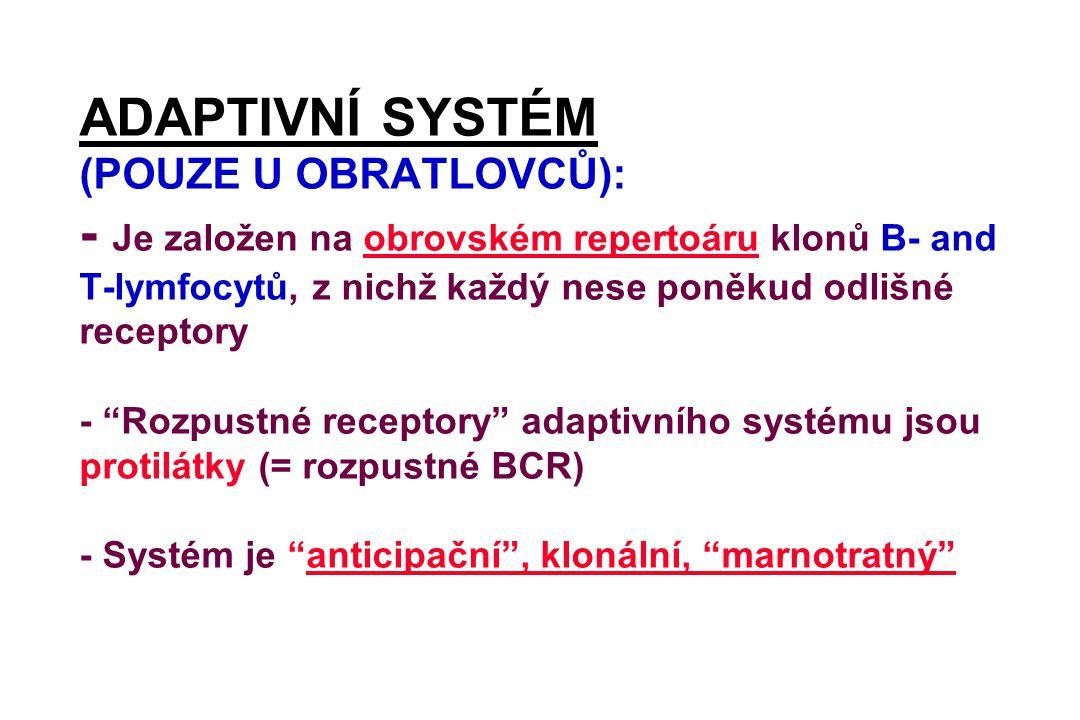 ADAPTIVNÍ SYSTÉM (POUZE U OBRATLOVCŮ): - Je založen na obrovském repertoáru klonů B- and T-lymfocytů, z nichž každý nese poněkud odlišné receptory - Rozpustné receptory adaptivního systému jsou protilátky (= rozpustné BCR) - Systém je anticipační , klonální, marnotratný