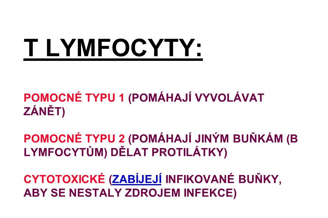 T LYMFOCYTY: POMOCNÉ TYPU 1 (POMÁHAJÍ VYVOLÁVAT ZÁNĚT) POMOCNÉ TYPU 2 (POMÁHAJÍ JINÝM BUŇKÁM (B LYMFOCYTŮM) DĚLAT PROTILÁTKY) CYTOTOXICKÉ (ZABÍJEJÍ INFIKOVANÉ BUŇKY, ABY SE NESTALY ZDROJEM INFEKCE)