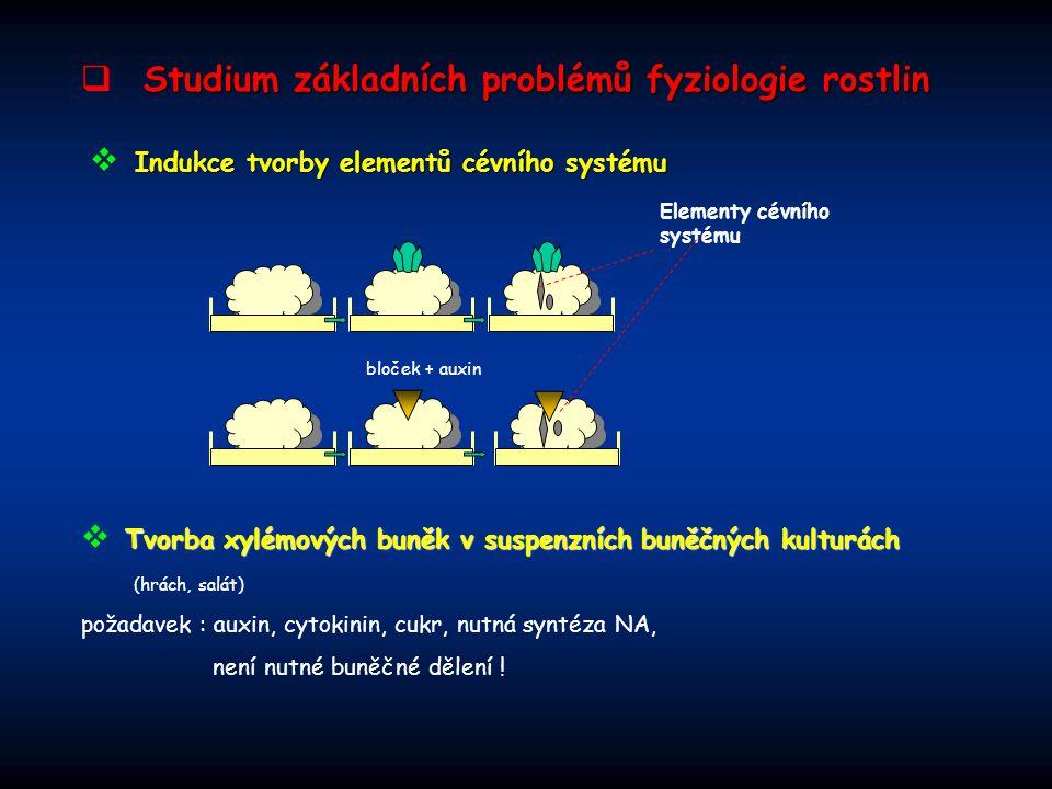 Studium základních problémů fyziologie rostlin