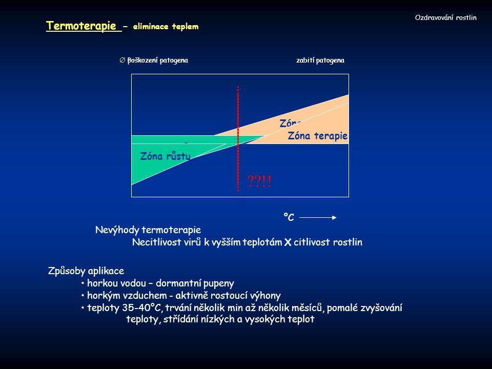!! Ozdravování rostlin Termoterapie - eliminace teplem °C Zóna růstu