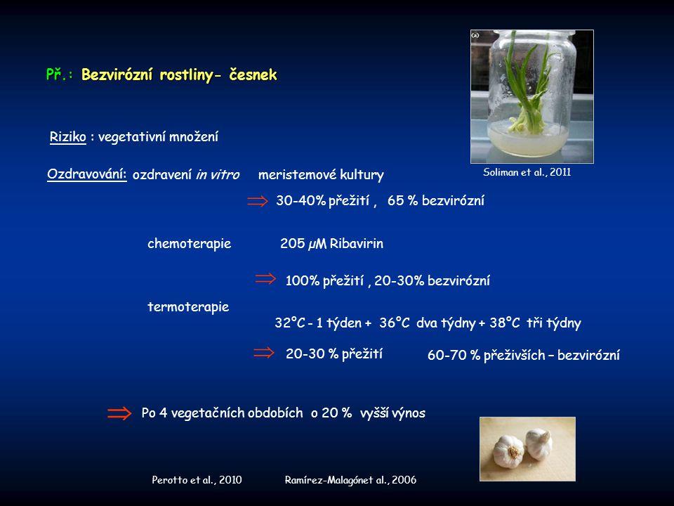     Př.: Bezvirózní rostliny- česnek