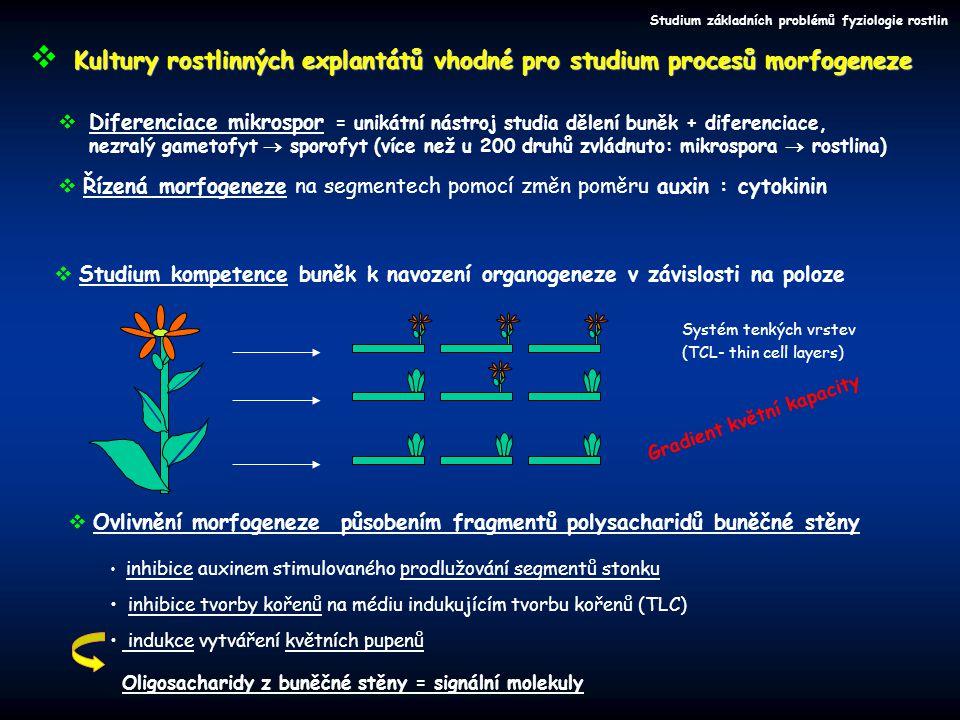 Řízená morfogeneze na segmentech pomocí změn poměru auxin : cytokinin