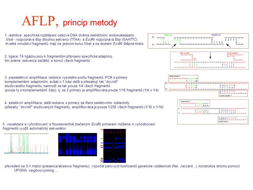 AFLP, princip metody 1. restrikce: specifické rozštěpení celkové DNA dvěma restrikčními endonukleázami: