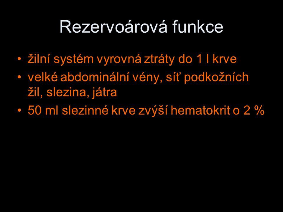 Rezervoárová funkce žilní systém vyrovná ztráty do 1 l krve