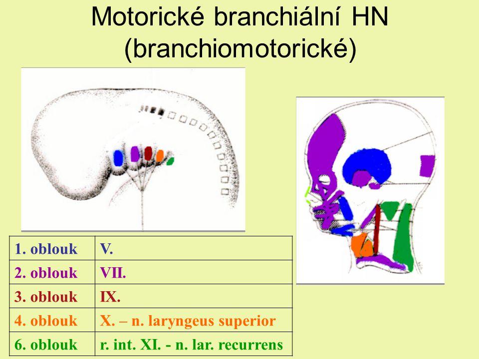 Motorické branchiální HN (branchiomotorické)