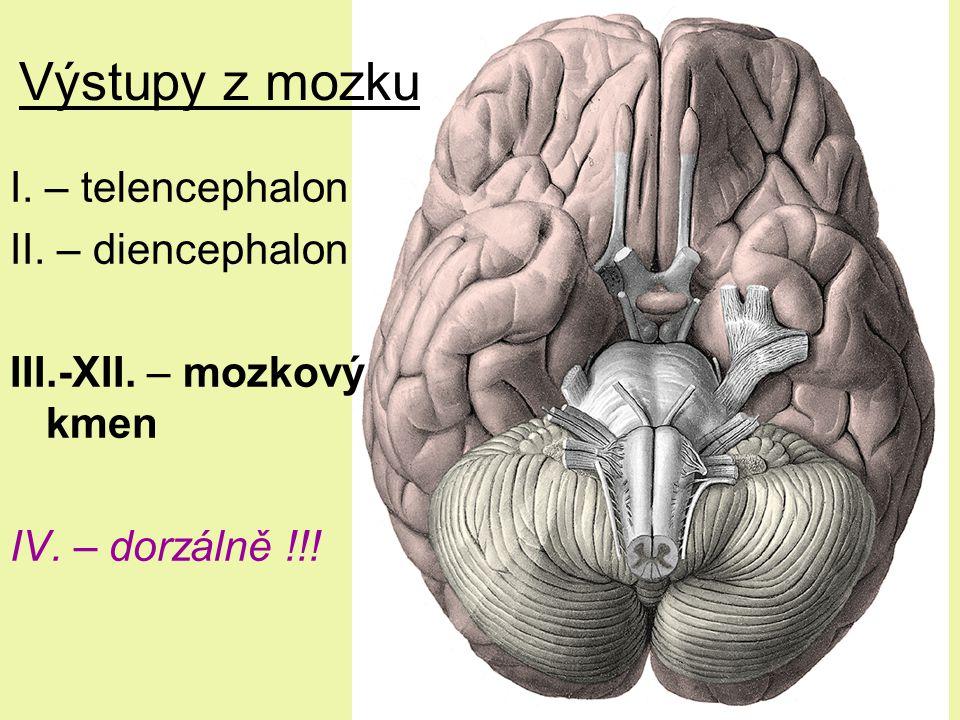 Výstupy z mozku I. – telencephalon II. – diencephalon