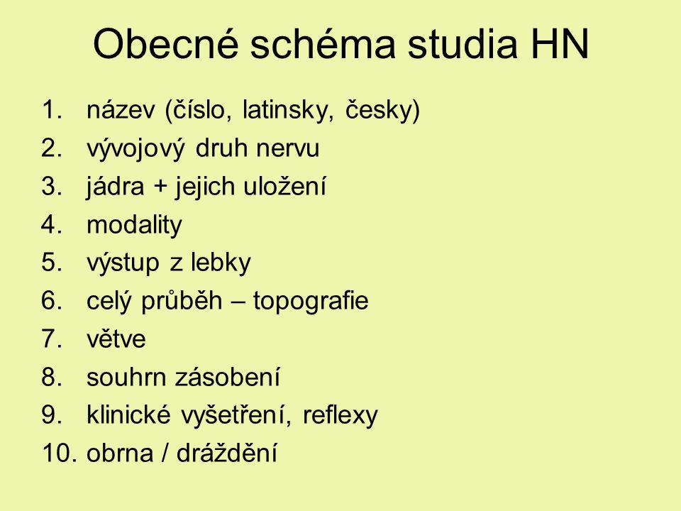 Obecné schéma studia HN