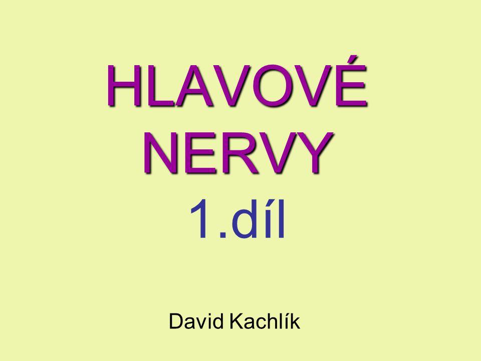 HLAVOVÉ NERVY 1.díl David Kachlík