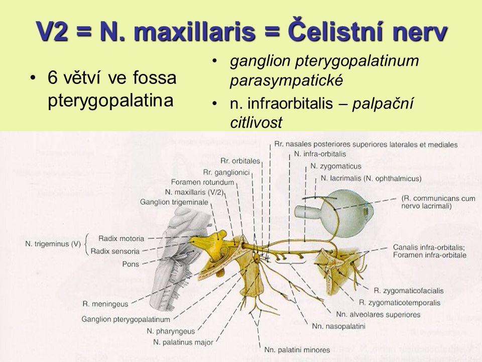 V2 = N. maxillaris = Čelistní nerv