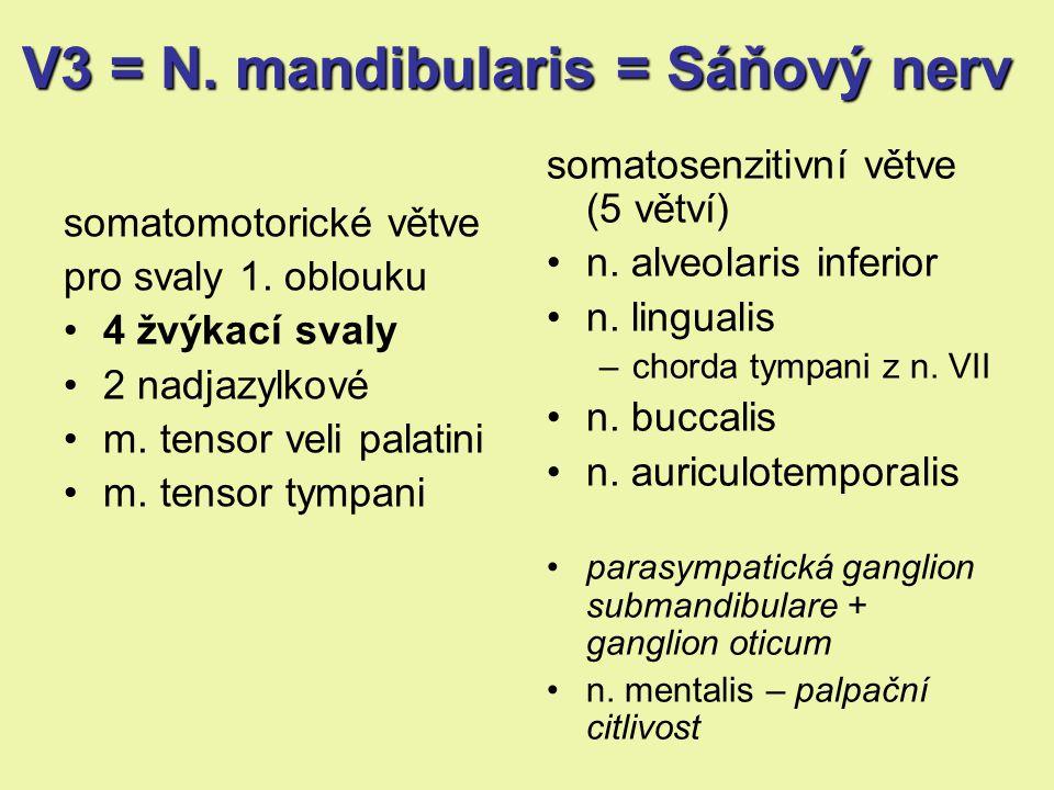 V3 = N. mandibularis = Sáňový nerv