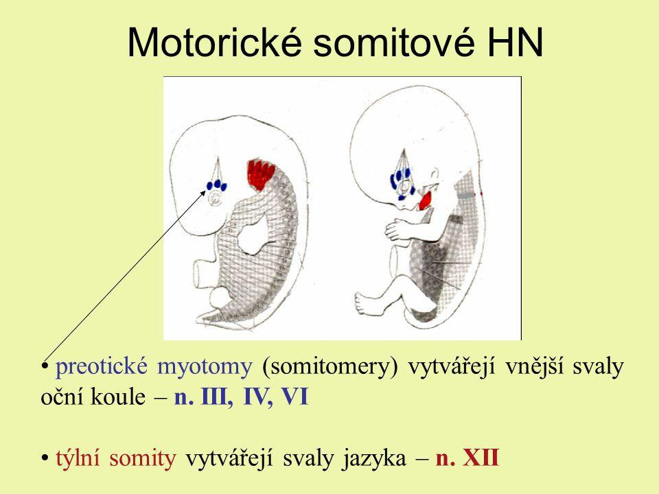 Motorické somitové HN preotické myotomy (somitomery) vytvářejí vnější svaly oční koule – n. III, IV, VI.
