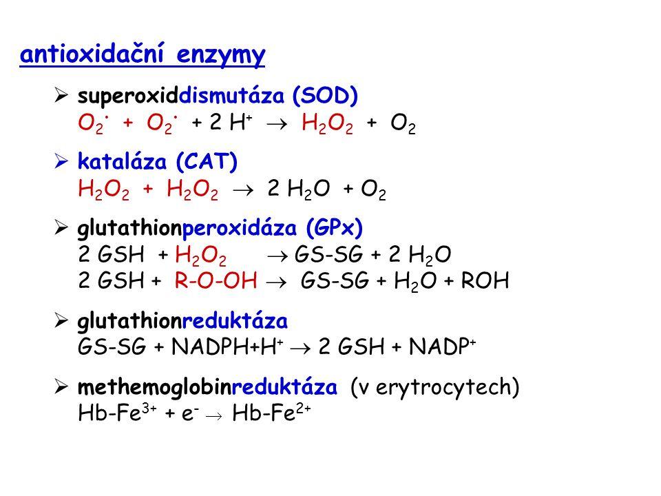 antioxidační enzymy superoxiddismutáza (SOD) O2• + O2• + 2 H+  H2O2 + O2. kataláza (CAT) H2O2 + H2O2  2 H2O + O2.