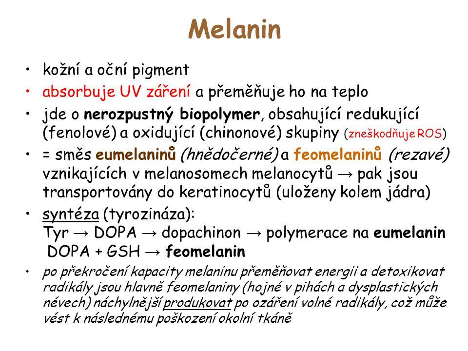 Melanin kožní a oční pigment