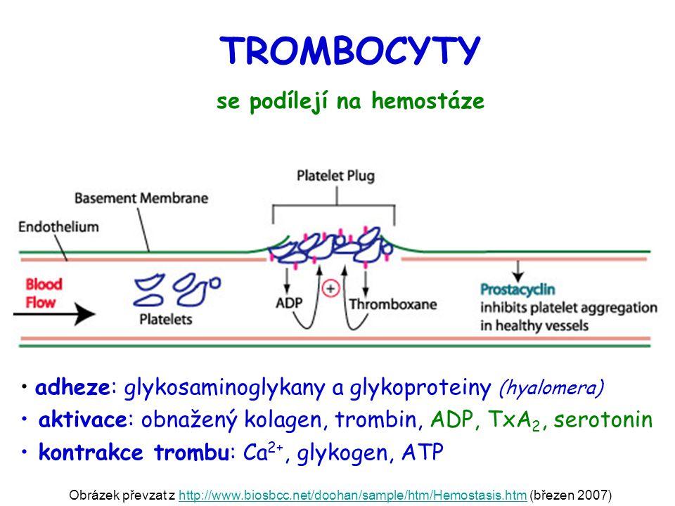 se podílejí na hemostáze