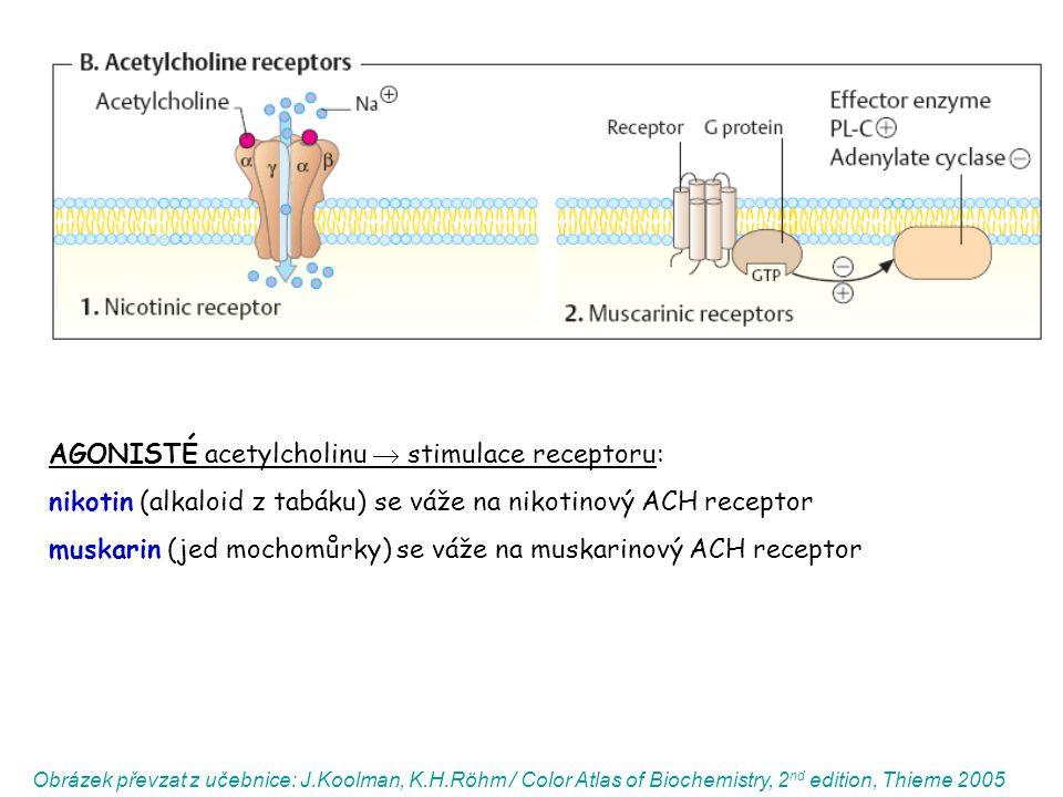 AGONISTÉ acetylcholinu  stimulace receptoru: