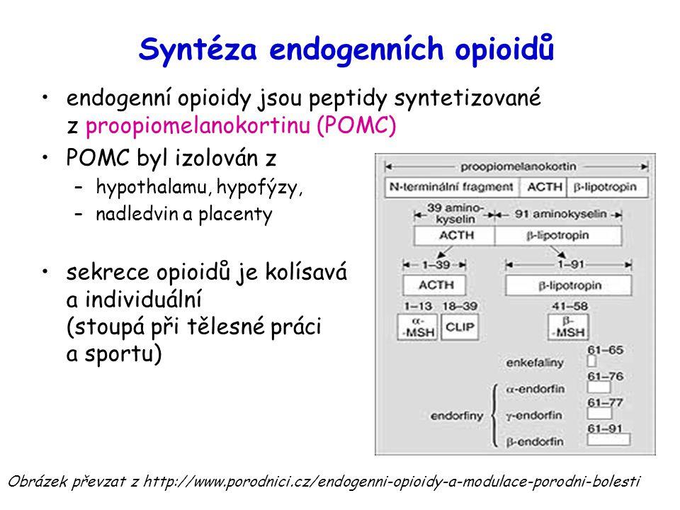 Syntéza endogenních opioidů