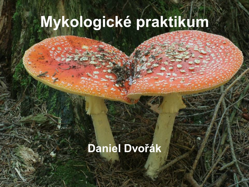Mykologické praktikum