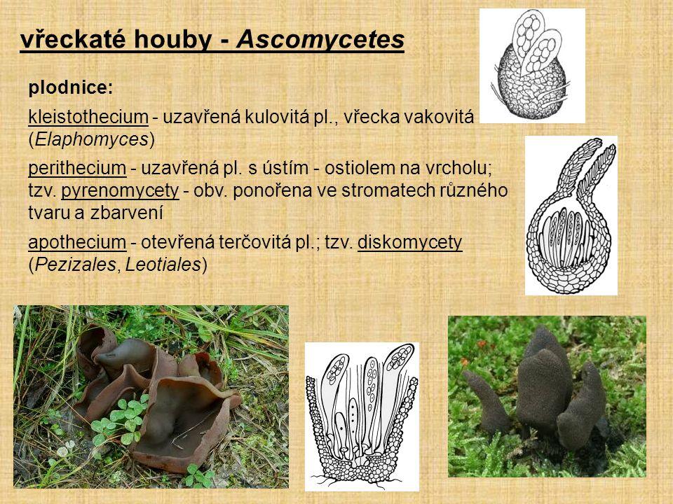 vřeckaté houby - Ascomycetes