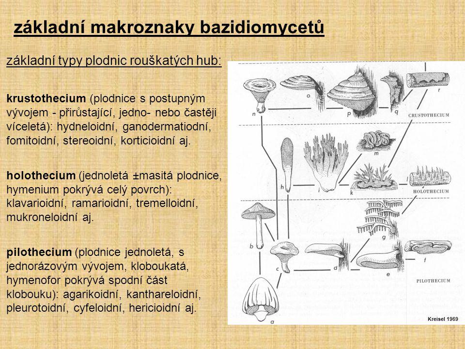 základní makroznaky bazidiomycetů