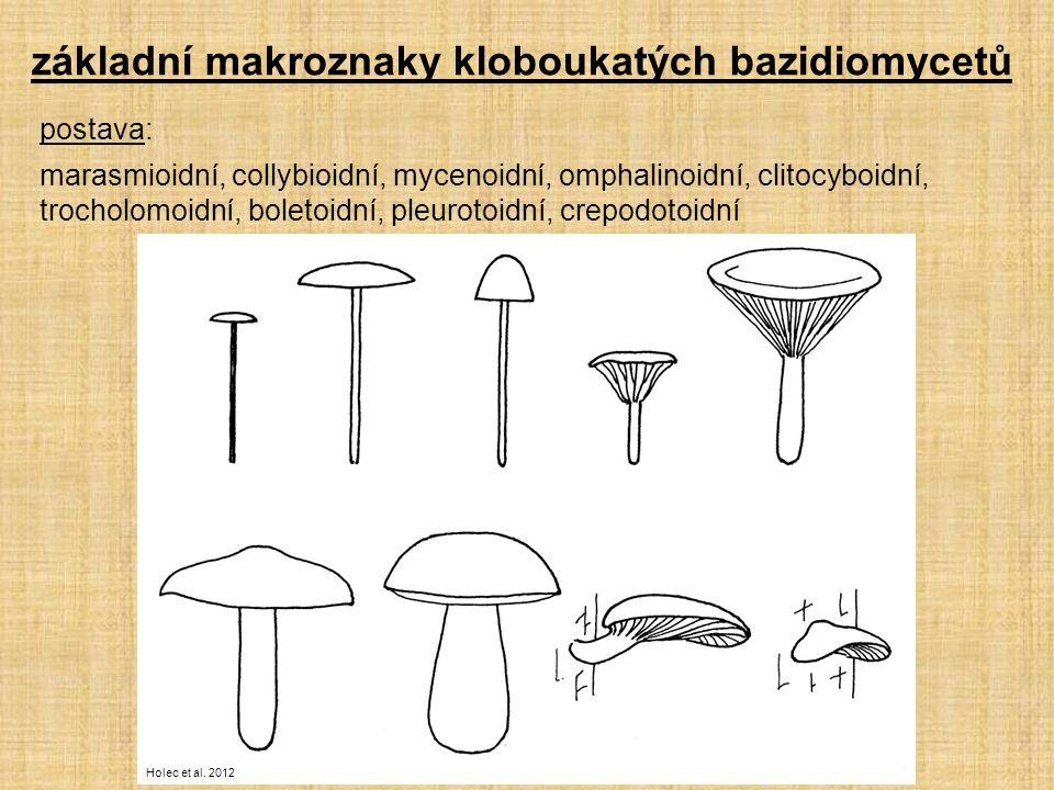základní makroznaky kloboukatých bazidiomycetů