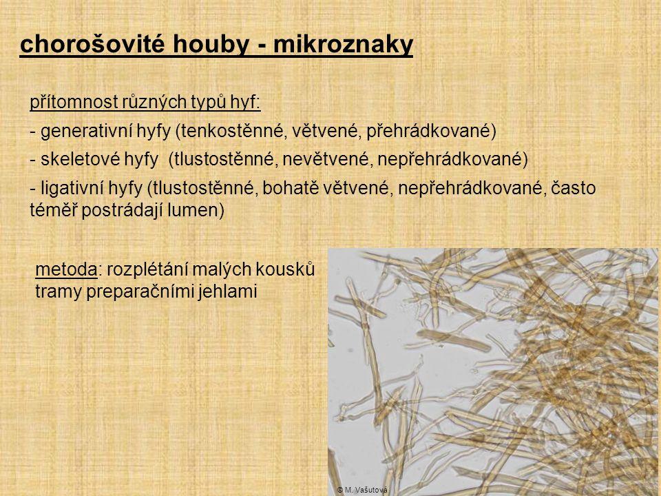 chorošovité houby - mikroznaky