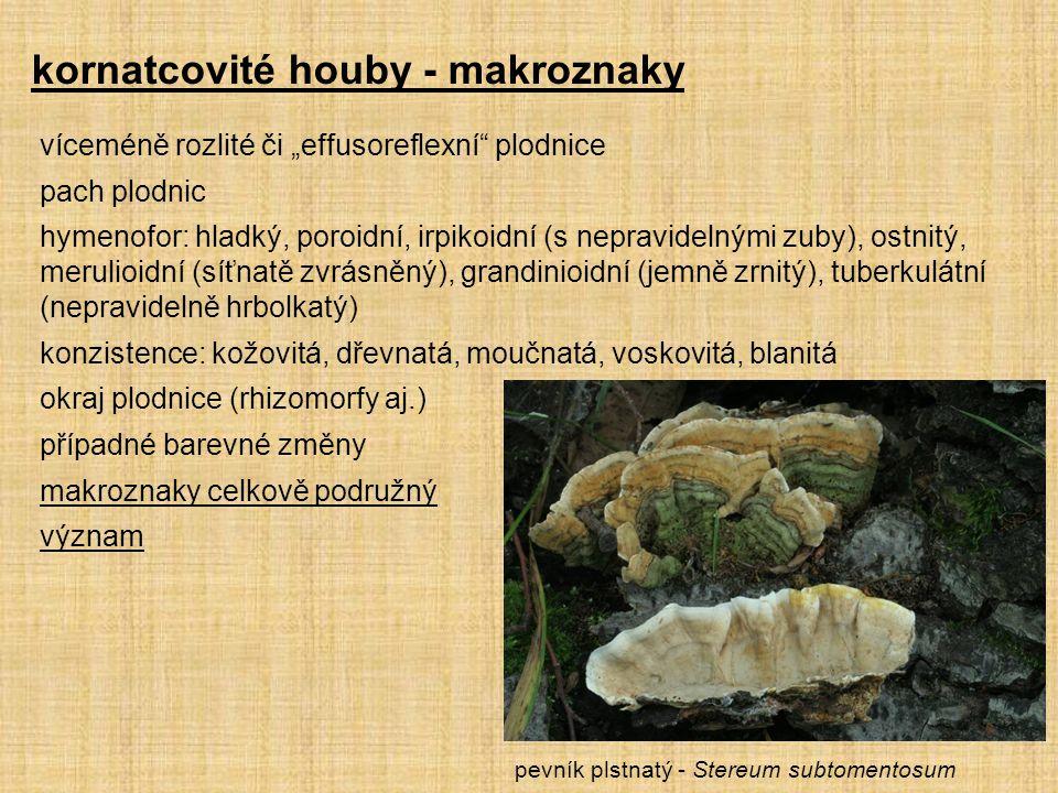 kornatcovité houby - makroznaky