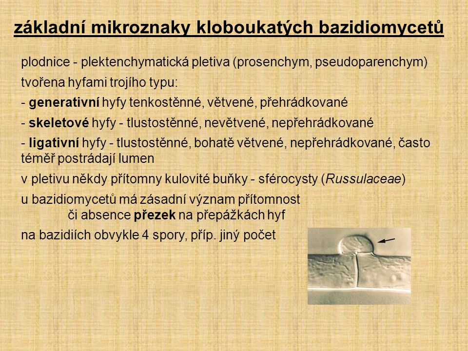 základní mikroznaky kloboukatých bazidiomycetů