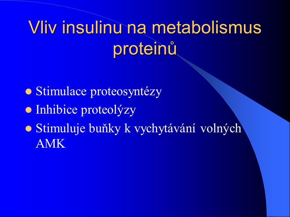 Vliv insulinu na metabolismus proteinů