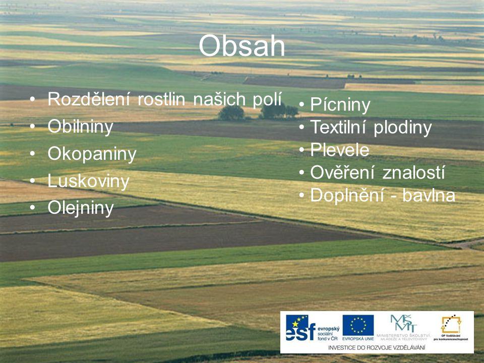 Obsah Rozdělení rostlin našich polí Pícniny Obilniny Textilní plodiny