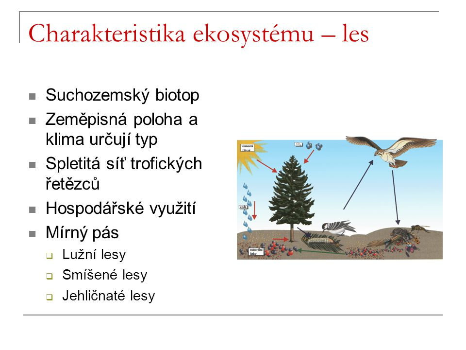 Charakteristika ekosystému – les