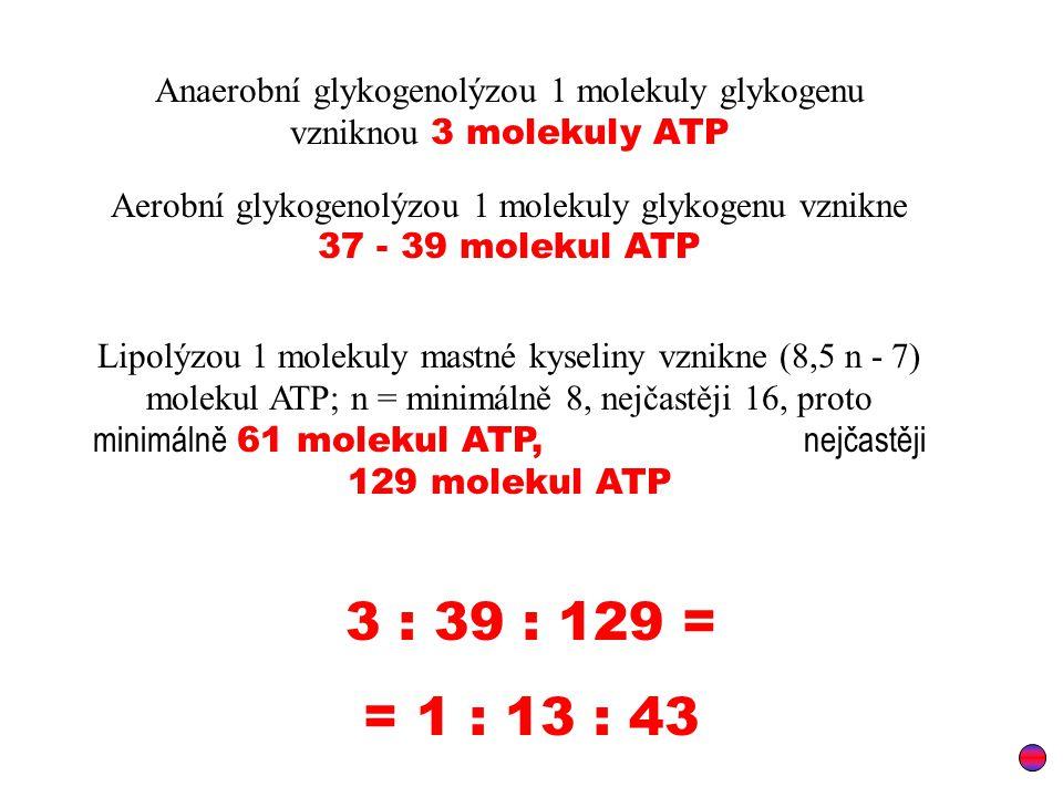 Anaerobní glykogenolýzou 1 molekuly glykogenu vzniknou 3 molekuly ATP